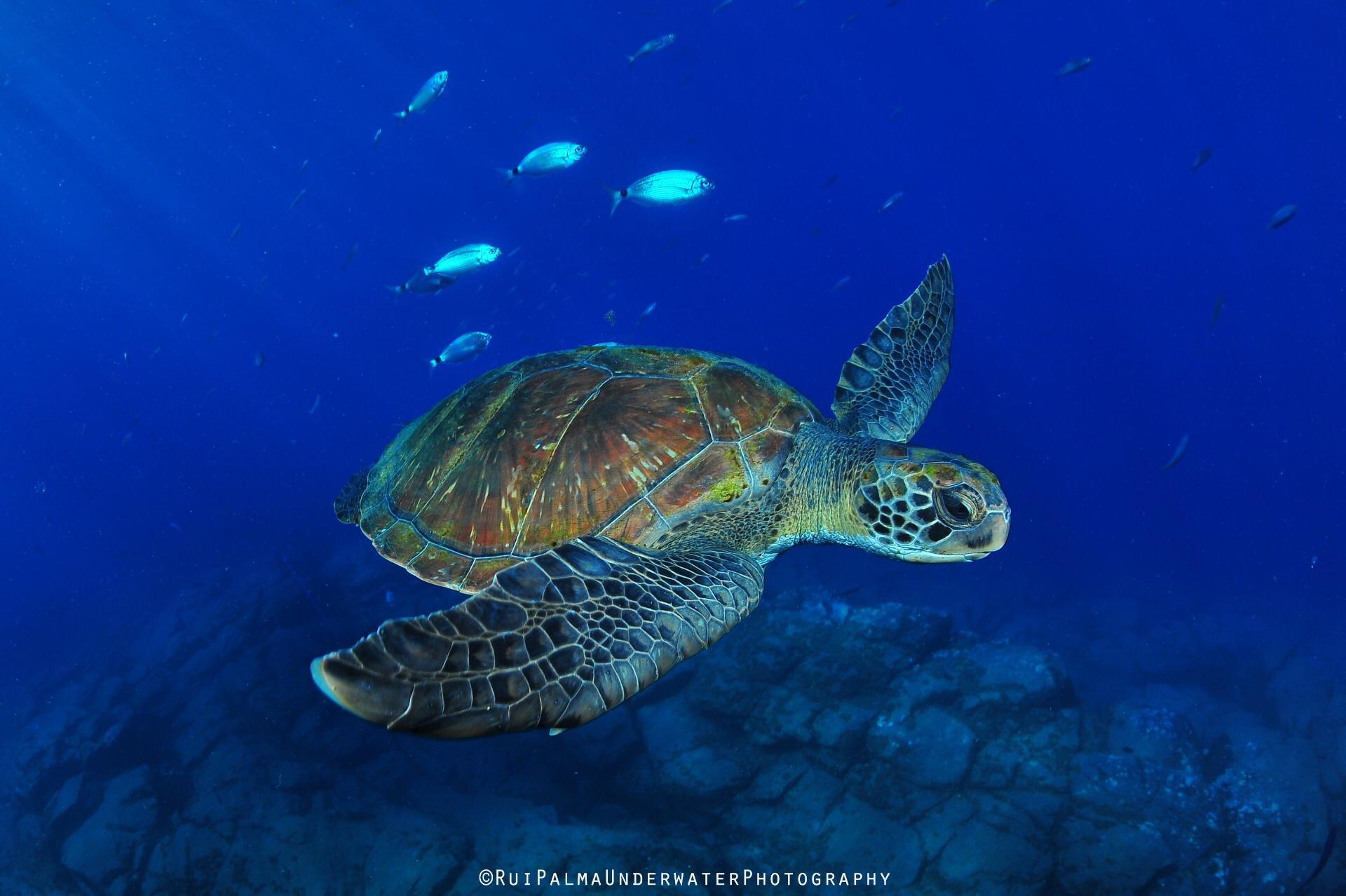 Mundial_Ambiente.jpg